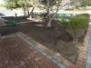 mulching front yard