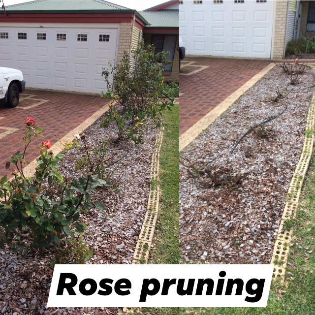 Pruning services Perth