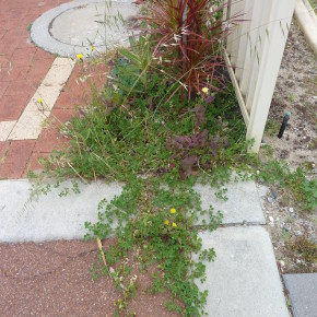 Weeds in garden bed