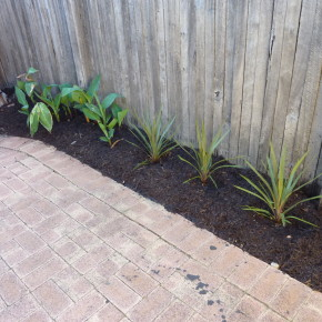 black mulch in garden beds with contrasting green plants